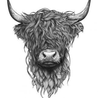Illustrasjon av highland ku