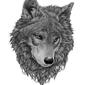 Print illustrasjon av ulv